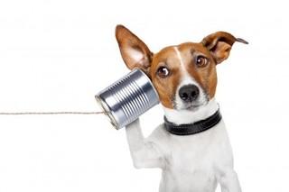 dog_call.jpg